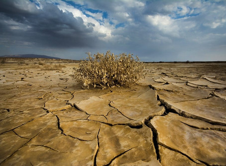 New Mexico's drought worsens with lack of monsoon moisture