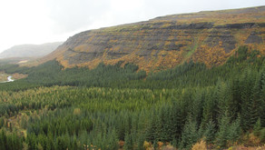 Good News for a Change: Reforesting Iceland