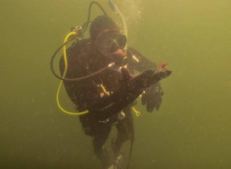 Puget Sound dive June 12