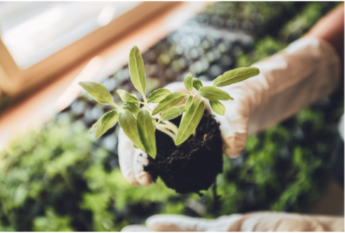 a person with a glove holding a seedling to be transplanted