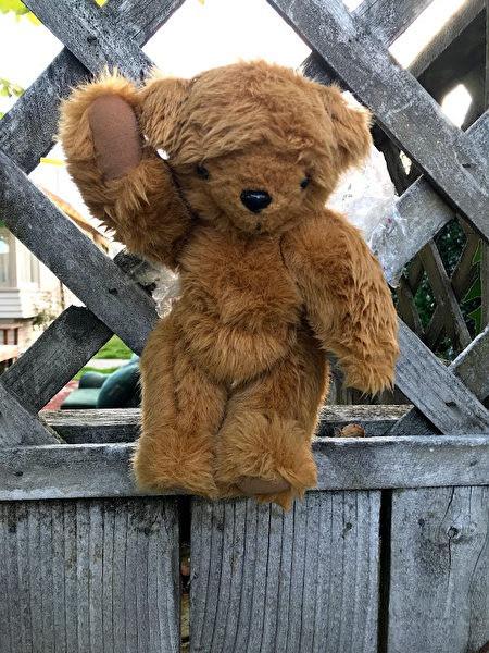 我長得很像樹懶嗎?我很確信我是小熊。