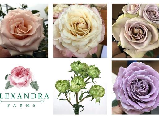 Alexandra Farms Announces Five New Garden Rose Varieties