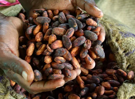 Child Labour in Ghana and the Ivory Coast: Western Cocoa Consumption's Exploitation of West Africa