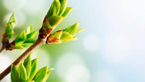 Gemmothérapie : les bourgeons et les jeunes pousses au service de l'Immunité