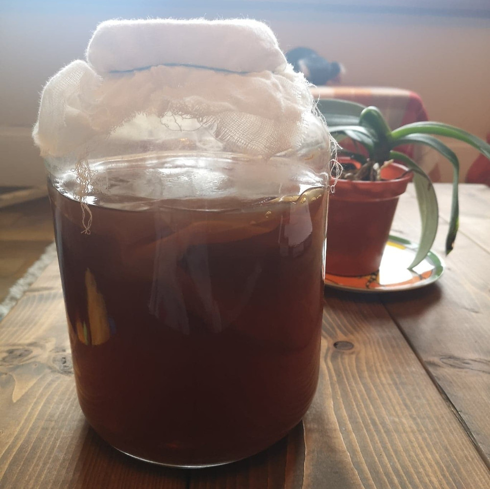 Komboucha fermented tea drink with SCOBY (symbiotic culture of bacteria and yeasts)