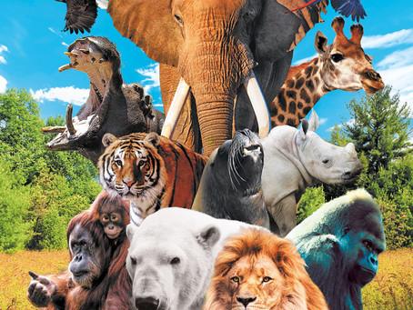 Idée sortie : le Zoo d'Amnéville (57)