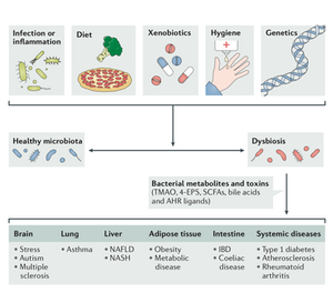 """""""Dysbiosis and the Immune System."""" Nature Reviews Immunology, vol. 17, no. 4, 2017, pp. 219–232"""