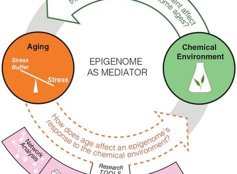 Chemical exposure, epigenetics, and aging
