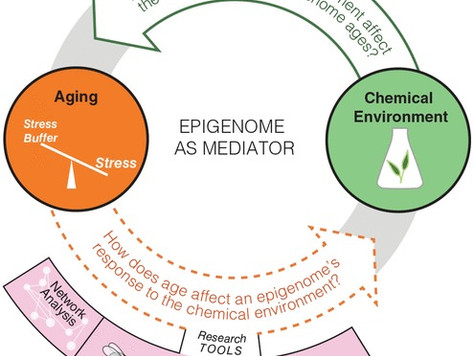 Chemical exposure, epigenetics, and aging