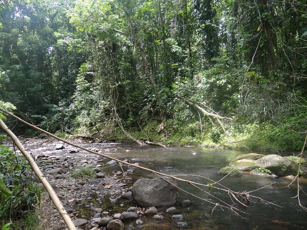 riviere lezarde guadeloupe sentier randonnée de la cascade tambour