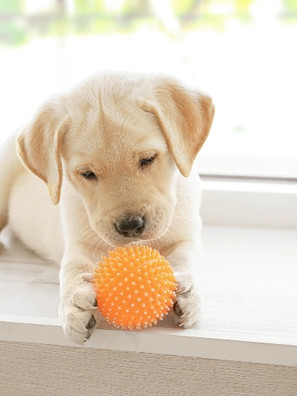How to Toilet Train a Puppy : Dog Doorbells