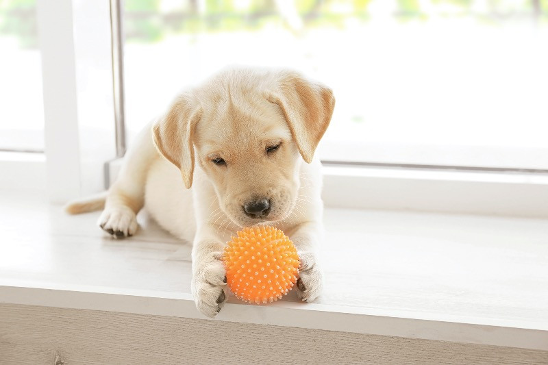 Dog playing with a toy on a windowsill
