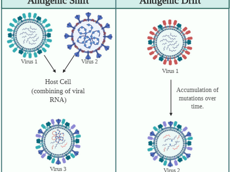 Antigenic Shift and Antigenic Drift: What could this mean for SARS-CoV-2?