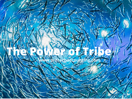 A special moment - A school of Fish (The Power of Tribe)