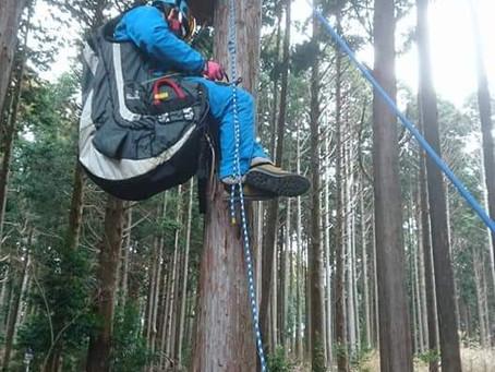 飛べない日は木登り