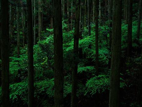 森など / Forest and others