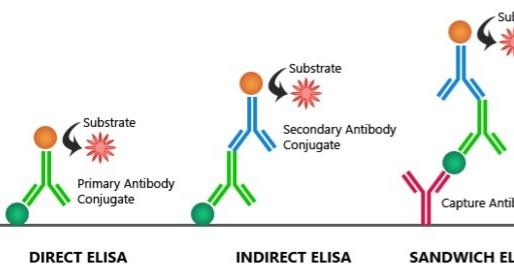 Serology and COVID-19
