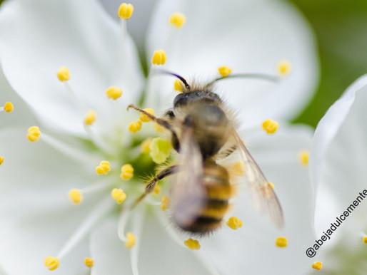 Crearán jardín para salvar abejas y otros polinizadores en Coyoacán
