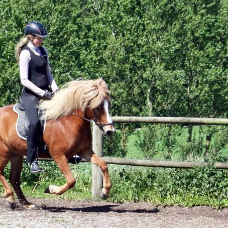Galoptræning på islandsk hest