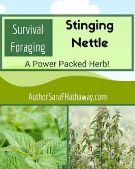 Survival Foraging: Stinging Nettle
