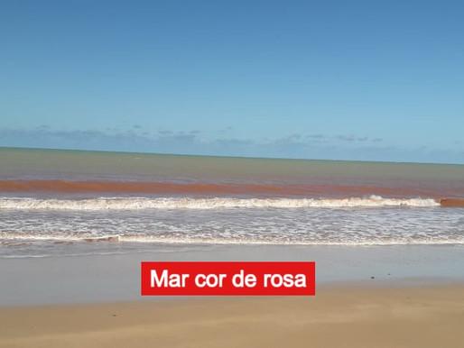 Porque o mar do Cabo Branco ficou cor-de-rosa ?