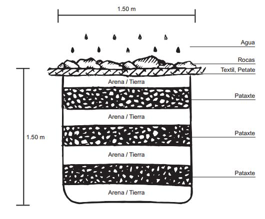 Esquema sobre proceso de pudrición de las semillas de Pataxte (T. bicolor).
