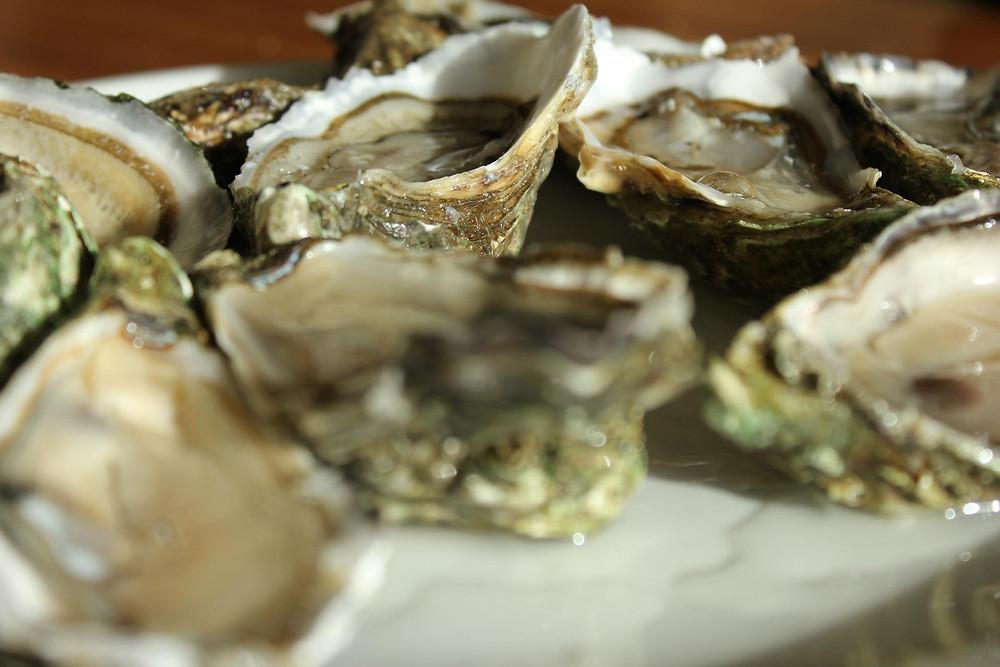 Frische Austern aus dem Becken von Arcachon