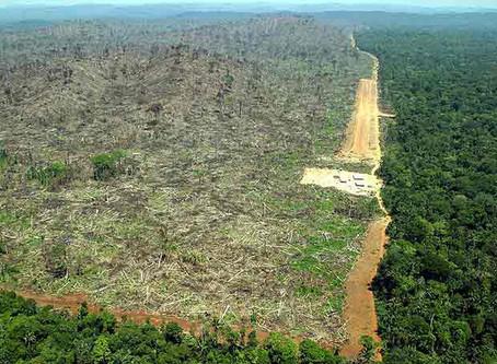A (perigosa) relação entre a Covid-19 e o desmatamento