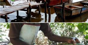 De la vie à Cuba - Par René Lopez Zayas - Pollo por pescado (poulet pour poisson)