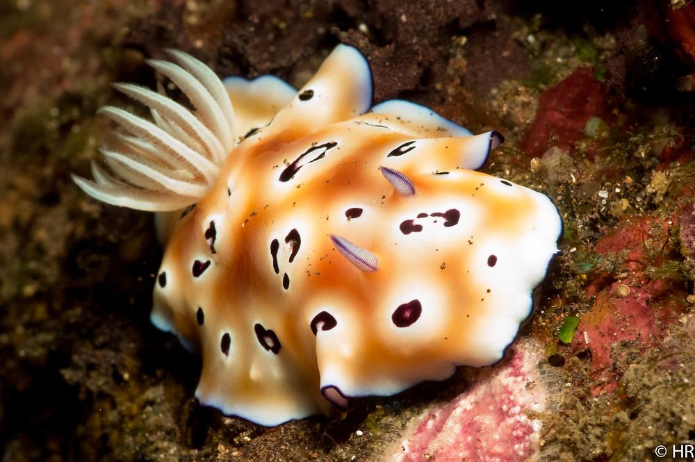 Diving Tulamben Bali
