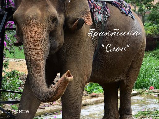 """Практика """"Слон"""""""
