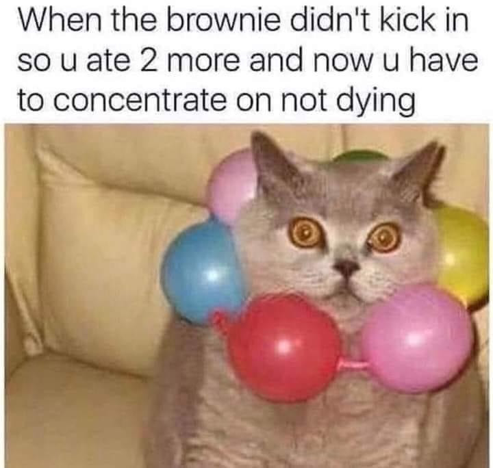 When the Brownie Didn't Kick In...eat 2 more concentrate on not dying