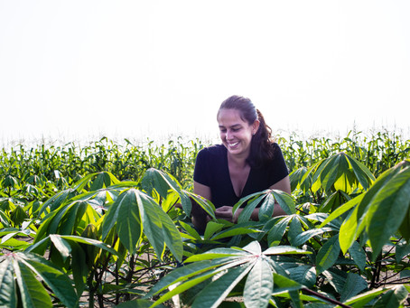 Scientists find ways to improve cassava, a 'crop of inequality' featured at Goalkeepers