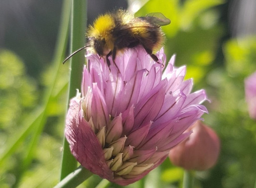 WEBINAR: Catch Jane Stout at Promote Pollinators Event for World Bee Day, May 20, 2020