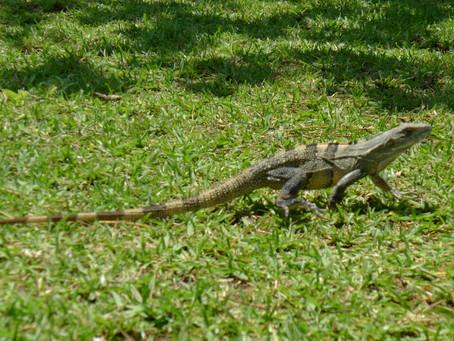 Sweet Costa Rica