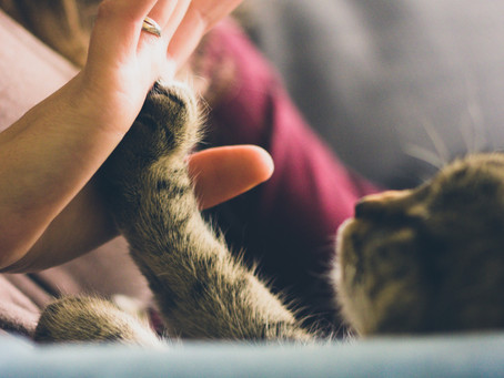 Cats Care More About People Than Food - Time Reports