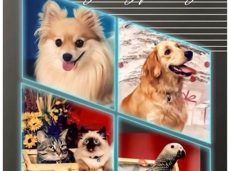 Pet Portraits Photo Sessions