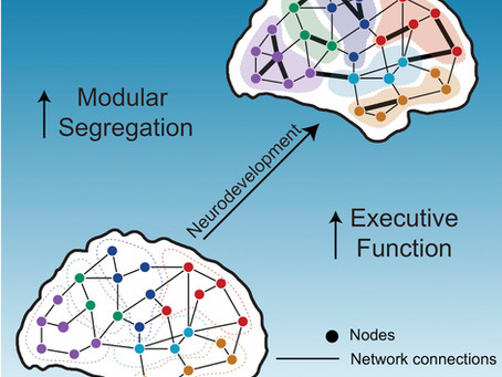Paper on developing brain networks featured on NPR