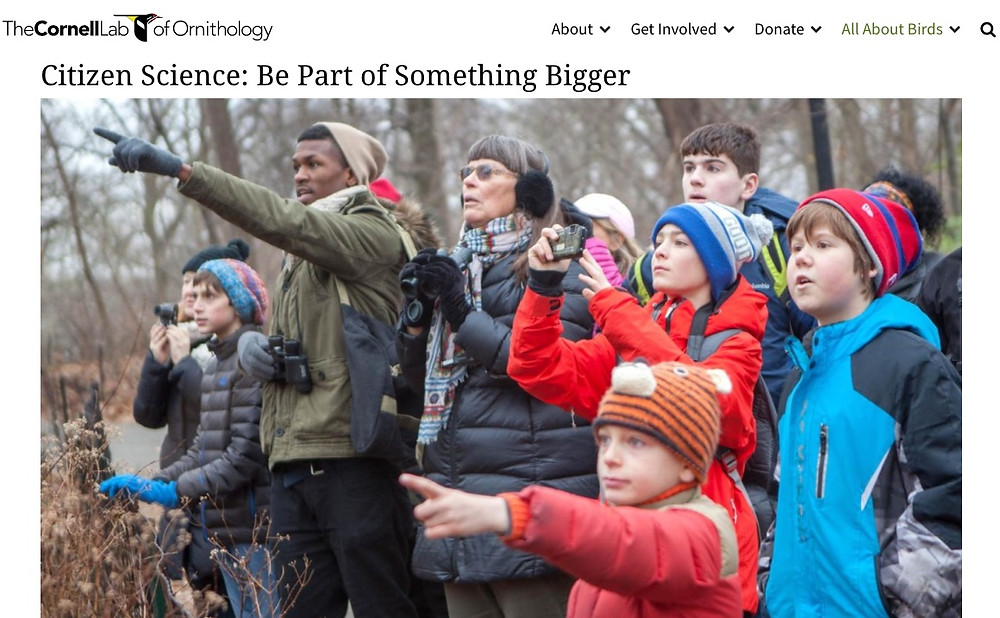 Citizen Science: Be Part of Something Bigger with Cornell Lab of Ornithology