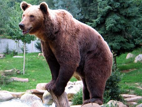 Alternatives Écologiques -  L'ours
