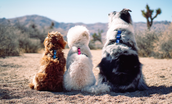 The Blue-9 Balance Harness for Dogs Provides Dogs with Comfort, Freedom of Movement and Flexibility