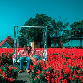 A must visit flower farm in Taichung, Taiwan : Houli / Chung - she Flower Farm