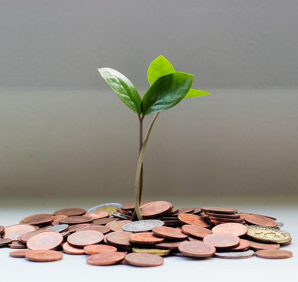 italki student with money