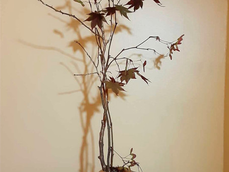 Branches-Sogetsu 4-3