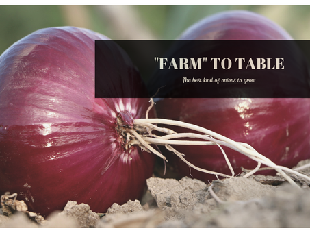 """""""Farm"""" to Table: The best kind of onions to grow"""