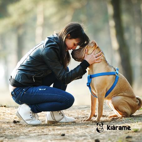 ¿Vuelve tu perro cuando lo llamas?  El comando de obediencia que puede salvar su vida.