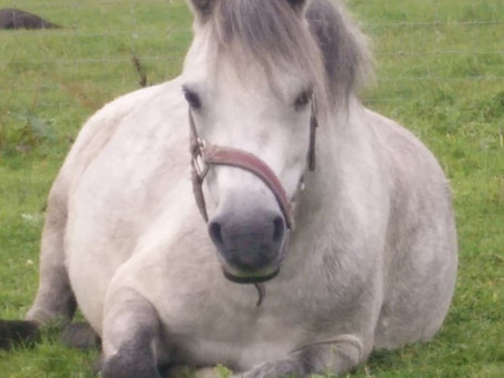 Fun ways you can enjoy your child's pony