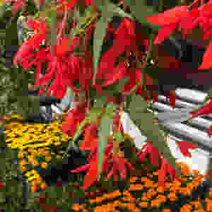 Array of garden center flowers of orange, yellow and red