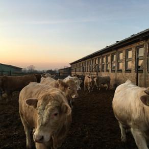 In sechs Tagen zum eigenen Unternehmen? // Modul: Existenzgründung in der Landwirtschaft