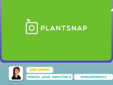 Waca Tics - Plantsnap